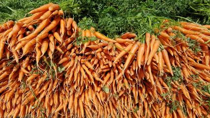 Big pile of fresh organic carrots at a summer farmers market