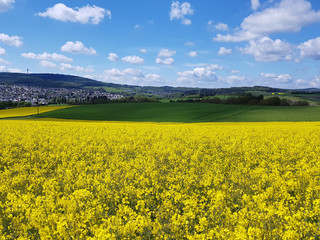 Foto op Canvas Meloen Landschaft, Taunus, Hessen