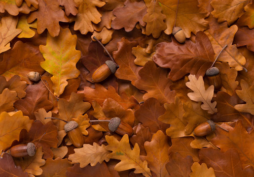 Natural background of golden autumn leaves fallen and acorns