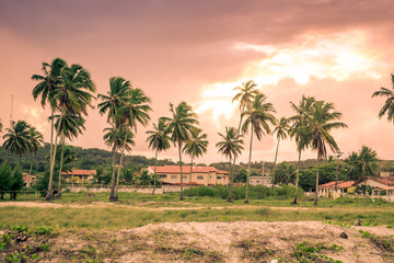 Coconut trees at the beach - Itamaraca island, Brazil