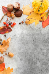 nature, season and botany concept - frame of different dry fallen autumn leaves, chestnuts, acorns and berries on grey stone background