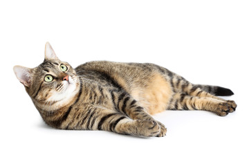 Beautiful cat lying on white background