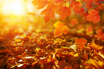 Autumn leaves on the sun.