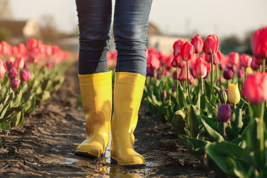 Woman in rubber boots walking across field with beautiful tulips after rain, closeup