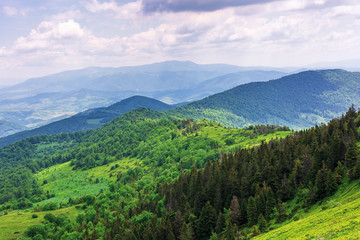 beautiful summer mountain landscape. forested hill rolling in to the distance. borzhava ridge on the horizon beneath a cloudy sky