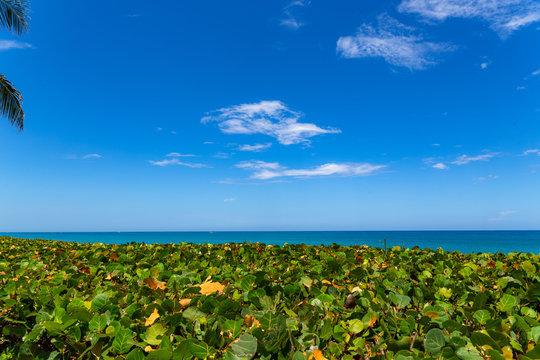 South Florida coastal palm trees and beach