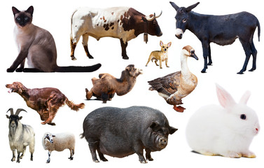 set of farm animals Wall mural