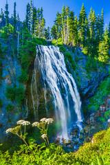 Fototapete - Narada Falls on a sunny blue sky day Mt. Rainier National Park.