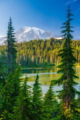 Fototapete - Overlooking a lake and a forest of pine trees with Mt. Rainier looming in the distance at Mt. Rainier National Park.