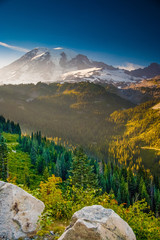 Fototapete - Overlooking a valley forest of pine trees with snow covered Mt. Rainier in the distance during late afternoon on a blue sky day in Mt. Rainier National Park.