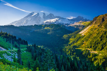 Wall Mural - Overlooking a valley forest of pine trees with snow covered Mt. Rainier in the distance during late afternoon on a blue sky day in Mt. Rainier National Park.