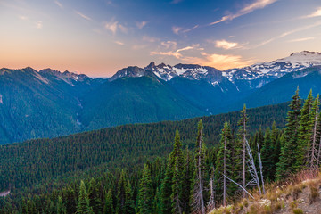 Wall Mural - Looking across a valley forest of pine trees and snow covered mountains in the distance during late afternoon in Mt. Rainier National Park.