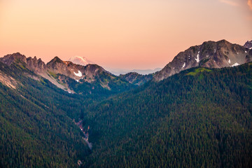 Wall Mural - Overlooking a pine tree covered valley with Mt. Rainier in the background.