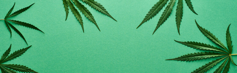 top view of green cannabis leaves on green background with copy space, panoramic shot Fototapete