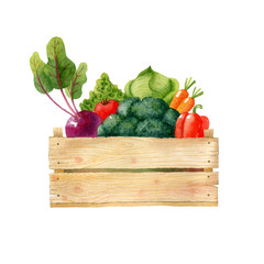 Wooden box with fresh organic vegetables isolated on white background. Watercolor illustration.