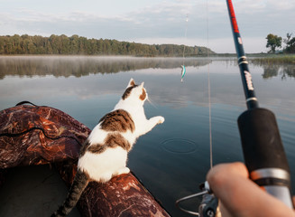 Domestic cat enjoys freedom outside the house on fishing with owners in the early morning in nature. The cat fishing on the inflatable boat on the river. A playful cat in an inflatable kayak rests