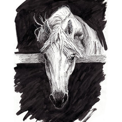 white horse head draw line