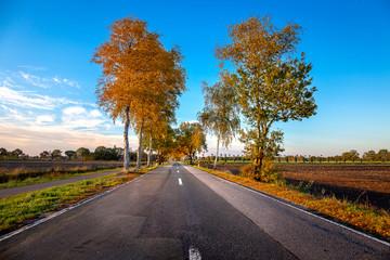 Road near Halsbek and Westerstede