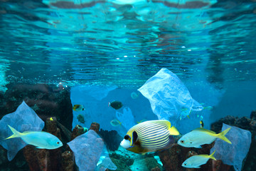 Spoed Foto op Canvas Koraalriffen Environmental pollution of plastic water bottle in the ocean