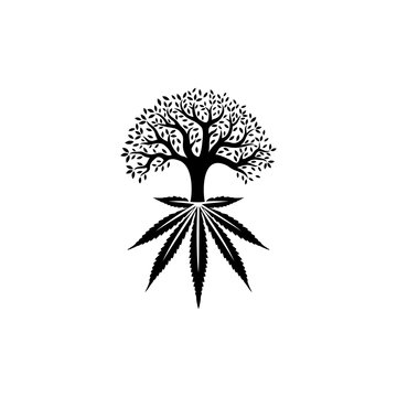 Trees with the roots of cannabis leaves