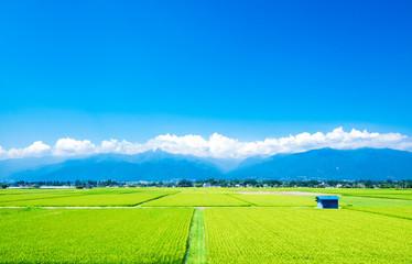 夏の田園風景 安曇野
