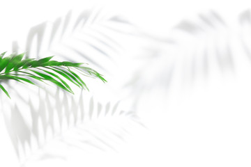 Wall Mural - Shadows from palm trees on a white wall