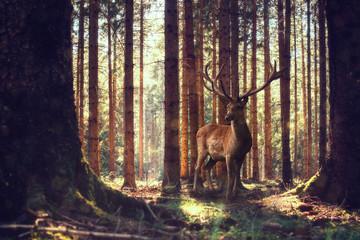Ein Hirsch steht im sonnigen Wald