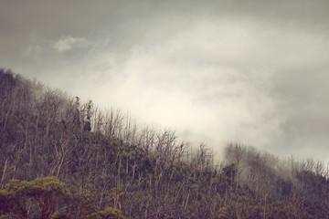 Foto auf Leinwand Fantasie-Landschaft Regenwald in Australien mit Nebel