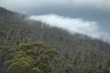 In de dag Fantasie Landschap Regenwald in Australien mit Nebel
