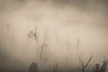 Deurstickers Fantasie Landschap Regenwald Wald mit Nebel in Australien