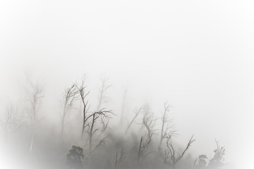 Photo Blinds Fantasy Landscape Regenwald Wald mit Nebel in Australien