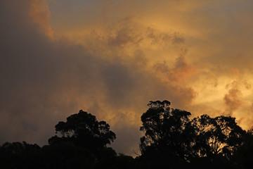 In de dag Fantasie Landschap Regenwald Wald mit Nebel in Australien