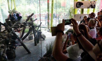 Visitors take pictures with their mobile devices of Chinese female panda bear Meng Meng in a compound at the zoo in Berlin