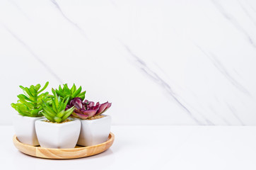 Empty marble wallpaper top table with green plant.