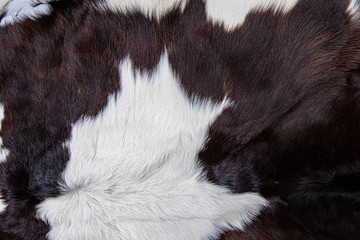 brown Cow skin coat with fur black white and brown spots
