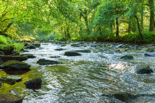 Along the river Barle in Tarr Steps Woodland