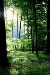 Keuken foto achterwand Bos in mist birch quiet fern