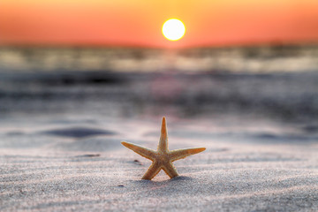 Starfish and beautiful sunset on the beach in Slowinski National Park near Leba, Poland. Wild, untouched nature.