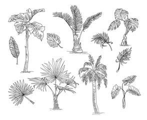 Palm tree sketch set