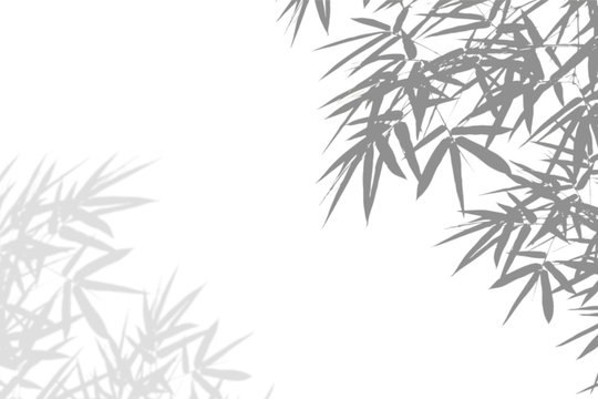 Bamboo leaves shadow blurred on white wall Background. Abstract nature pattern. Blank copy space.