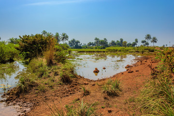 Ponded water in Guinean Savanna bush area in wet season near Kamsar, Guinea.