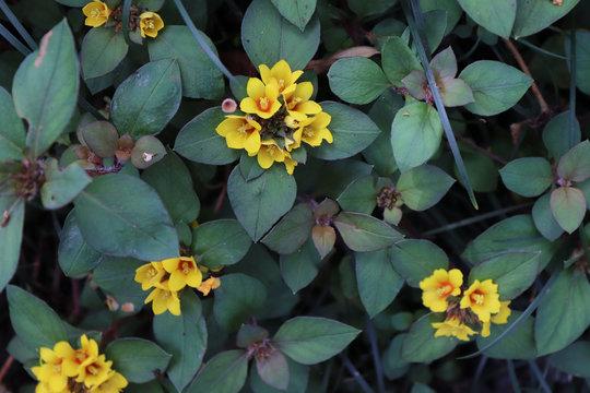 yellow flower macro closeup