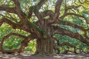 Old Oak tree in a garden