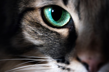 Cat eye macro closeup animal