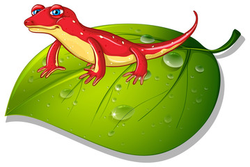 Red gecko on green leaf