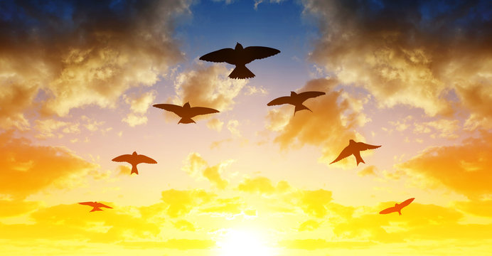 Silhouette flock of birds flying in V-formation at sunset.