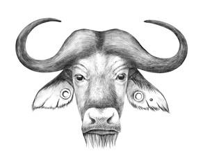 Fototapete - Hand drawn anthropomorphic portrait of buffalo