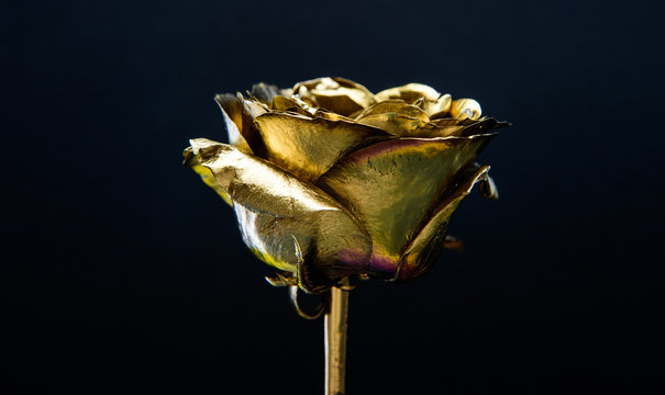 luxury and success. metallized decoration. antique concept. natural beauty. Gold rose. wealth and richness. golden flower. flower shop decor. floristics business. Vintage and jewelry. anniversary