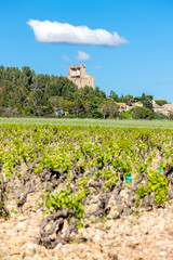 vineyards near Chateauneuf-du-Pape, France