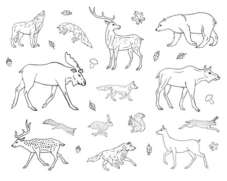 Vector hand drawn sketch set collection of forest animals isolated on white background